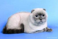 Скажите , вот этот красавец какого окраса?  Делу время, а... коту по-фиг.